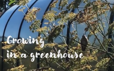 Watch: A Greenhouse is a Dreamhouse